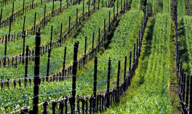 加州可持续酿酒葡萄种植酿酒联盟推出新网站