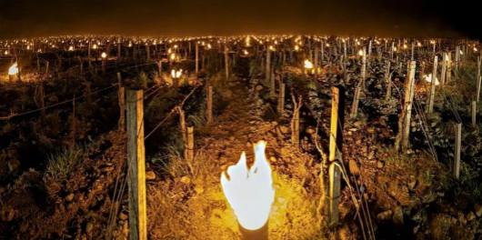 寒潮袭击意大利,多个葡萄酒产区受到影响