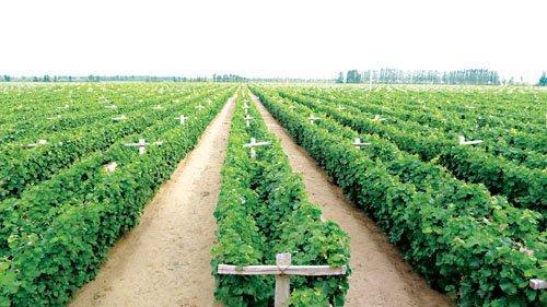 甘肃省葡萄酒产业协会第二届第一次理事会议日前举行