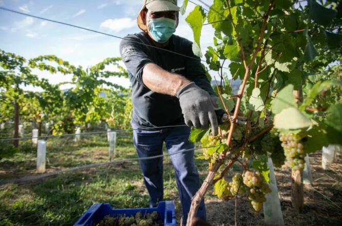 欧盟委员会拒绝为葡萄酒业给予援助