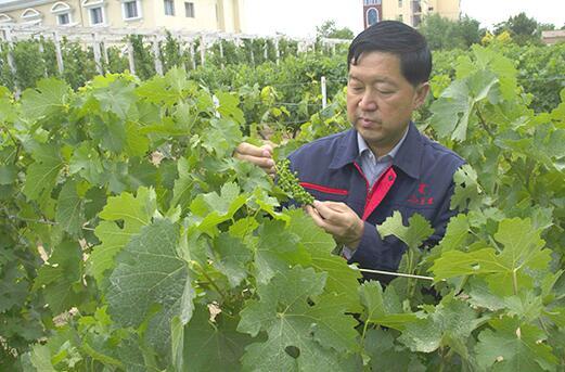 宁夏恒生西夏王酒业首席酿酒师俞惠明荣获全国五一劳动奖章