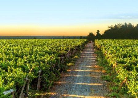 吐鲁番市日前召开葡萄酒产业发展专题会议
