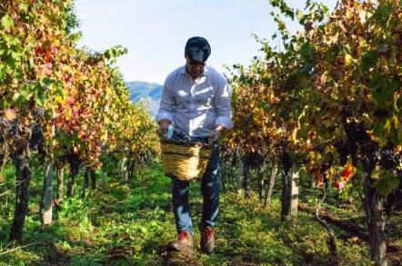 西西里葡萄酒首次通过La Place de Bordeaux平台发售