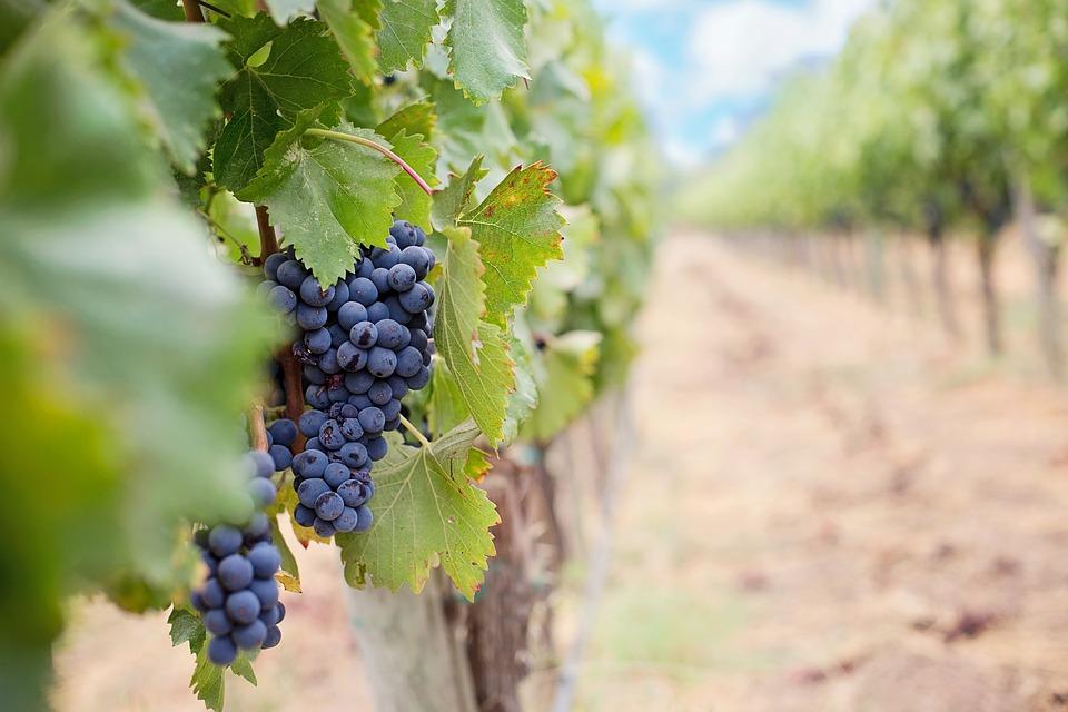 土耳其葡萄酒产区