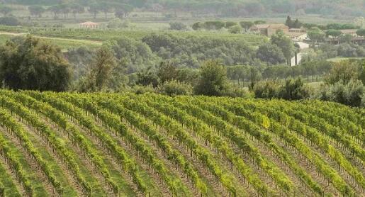 2015年份、2016年份布鲁奈罗葡萄酒销售量再创新高