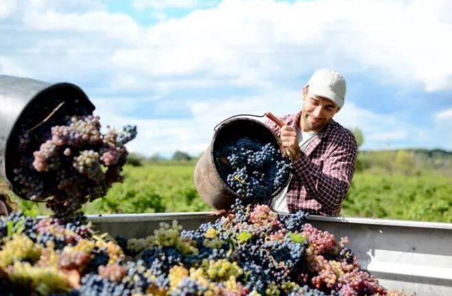 智利葡萄酒2021年一季度出货量超过疫情前水平