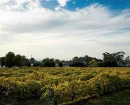受征收中国关税影响,澳洲葡萄园扩张活动有所减缓