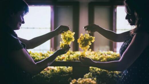 酿酒葡萄保额在意大利农作物中排名第一