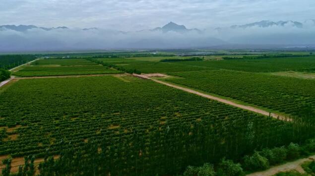 宁夏国家葡萄及葡萄酒产业开放发展综合试验区,有利于国产葡萄酒发展