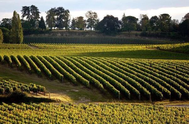 波尔多可持续认证酒庄数量居法国之首