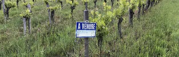 受疫情影响,法国葡萄园价格波动极大