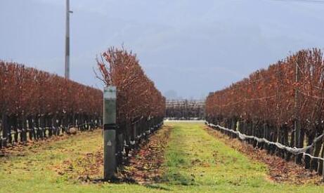 新西兰马尔堡葡萄酒旅游产业没有带来市场复苏