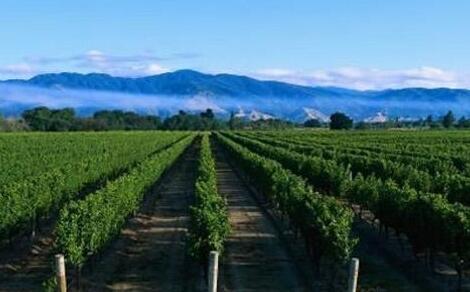 宁夏葡萄酒2020年出口逆势增长46.4%