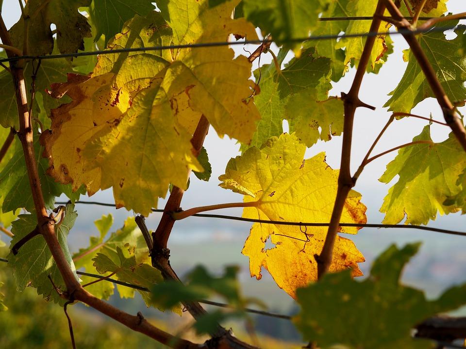 尼泊尔葡萄酒产区