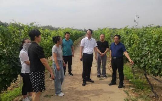 吐鲁番葡萄酒产业发展小组率队实地考察贺兰山东麓葡萄酒产区