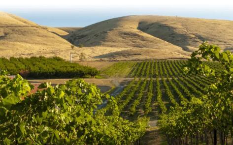 鹅峡成为华盛顿州最新美国葡萄种植区