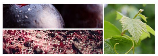 OIV与5家葡萄酒公司建立科研合作关系