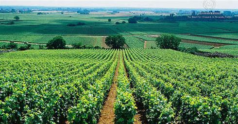 贺兰山东麓葡萄酒产区交流洽谈及考察活动在银川举行