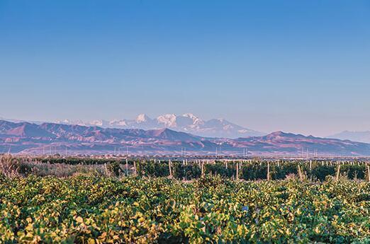 为加快葡萄酒产业发展,新疆出台指导意见