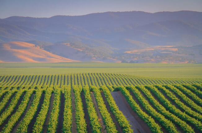 《贺兰山东麓葡萄酒技术标准体系》推动宁夏葡萄酒产业高质量发展