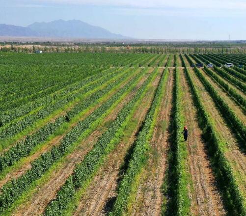 宁夏文化和旅游产业推动葡萄酒产业高质量发展
