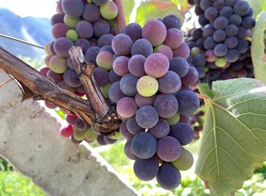 韩国2020年葡萄酒进口额同比增长27.3%
