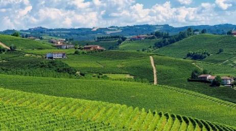 意大利葡萄2021年采收概况总结