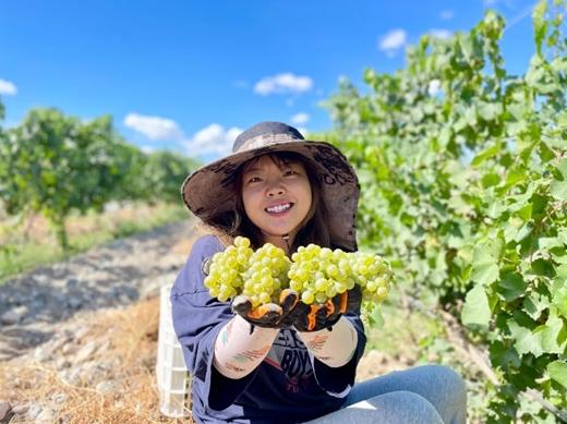 宁夏贺兰山东麓葡萄酒产区迎来2021年榨季