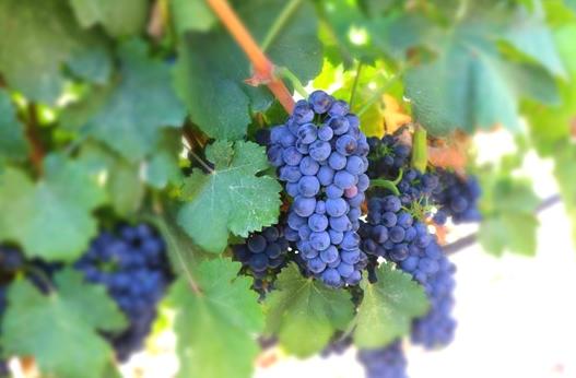 宁夏政府网发布关于废止和修改部分行政规范性文件的决定其中以下与葡萄酒产业相关