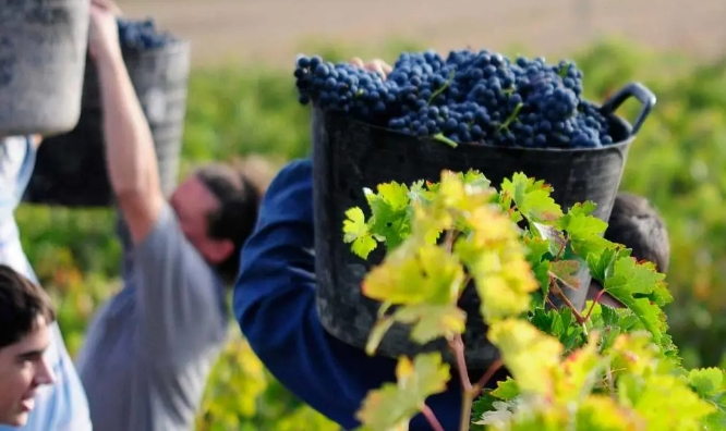 西班牙农牧民工会联盟抗议葡萄收购价格