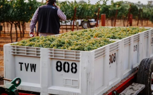 2021年加州酿酒葡萄产量约360万吨