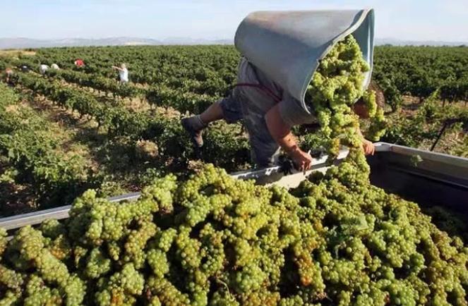 2021法国波尔多预计减产30%,仍是消费市场高认知和转化的葡萄酒?   微酿观察