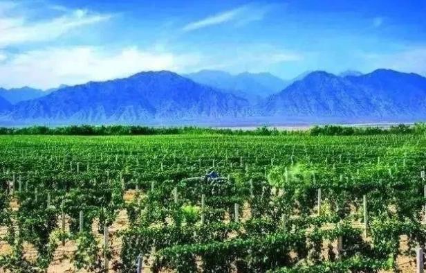 """银川市5家公司获批许可使用""""贺兰山东麓葡萄酒""""地理标志"""