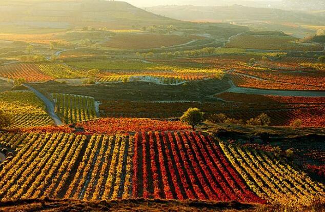 西班牙葡萄酒出口量价均超过新冠疫情前水平