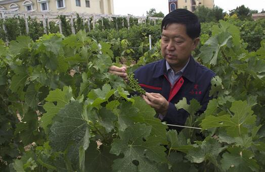 """第三届""""中国酿酒大师""""评选结果公布"""