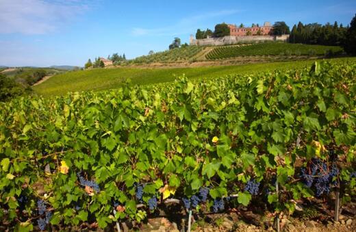 意大利经典基安蒂产区葡萄产量预计减产10-20%