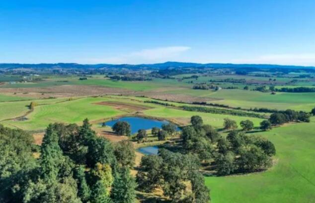 NBA球星麦科勒姆在俄勒冈州买土地,打造葡萄园
