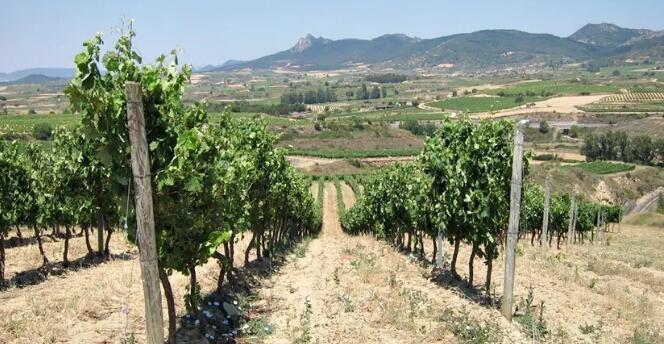 穆尔西亚地区葡萄种植面积同比减少50%