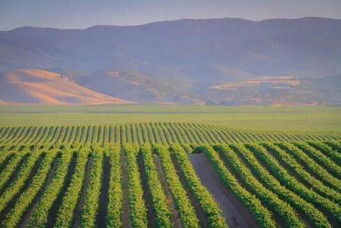 宁夏已引进17家葡萄酒产业外资项目