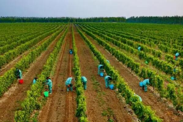 中国(银川)葡萄酒产学融合高质量发展论坛将在银川举办