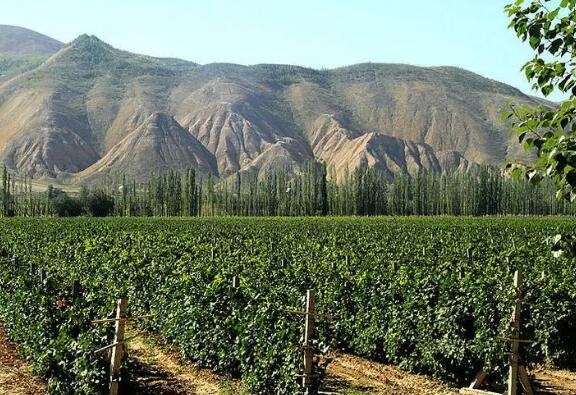 工信部将加大对新疆葡萄酒产业发展的支持力度