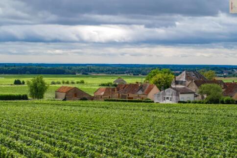 全球最受欢迎的葡萄酒,你了解多少?
